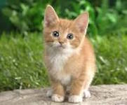 Your Happy Tail Pet Sitting: kitten image